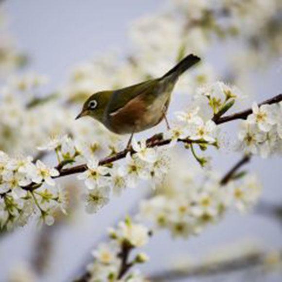 Marzo, ancora posti disponibili nel mese della primavera